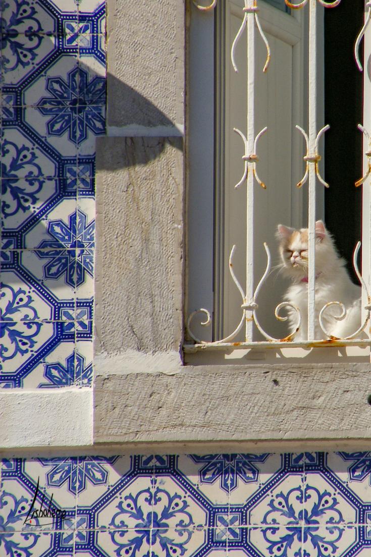 Chat à la fenêtre, Cascais, région de Lisbonne, Portugal